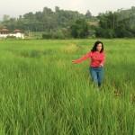 บรรยากาศสบาย ๆ ที่ไร่ข้าวเกษตรอินทรีย์ 3